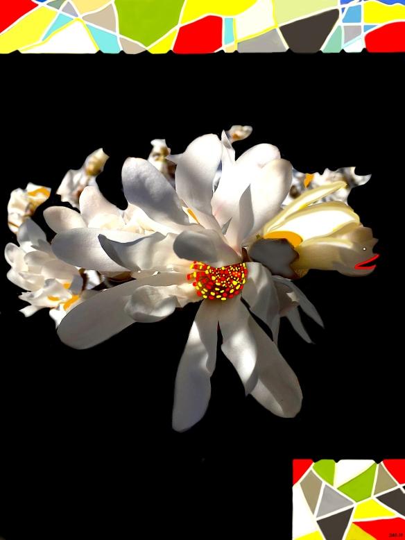 MagnoliaEncantada