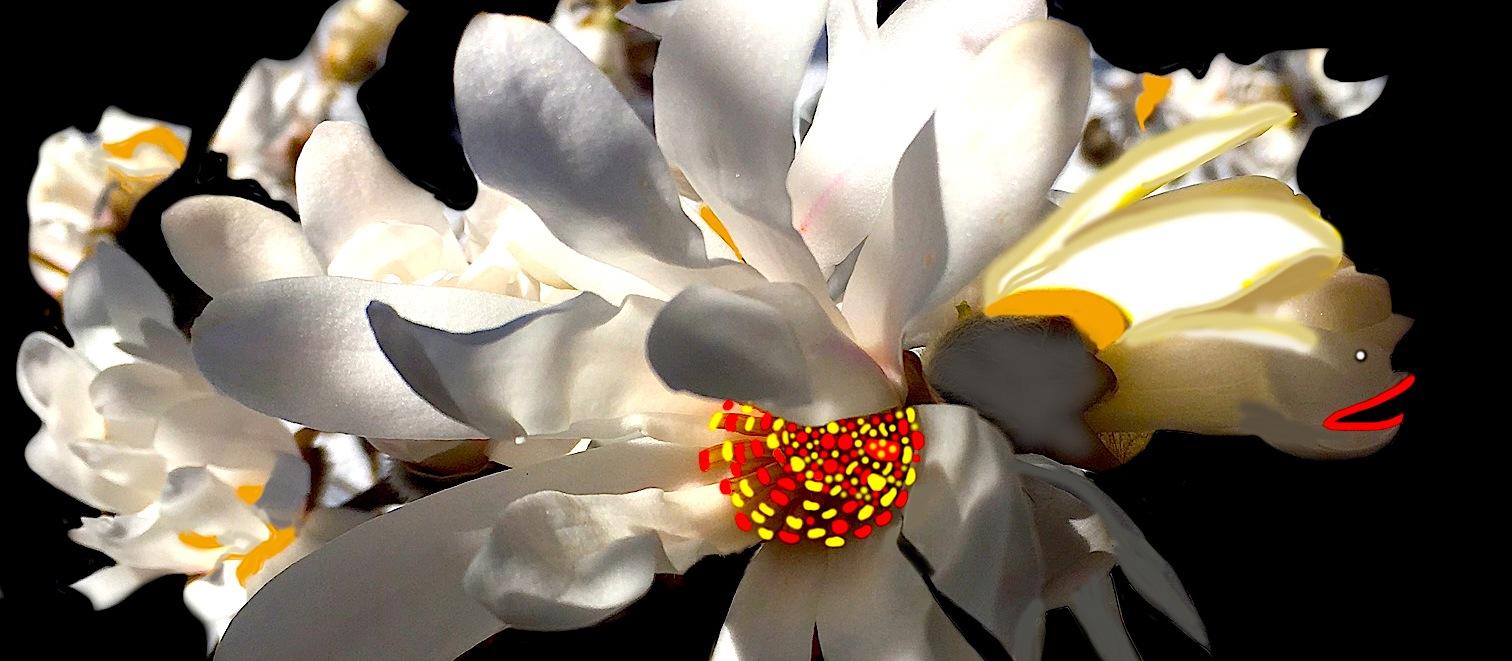 MagnoliaEncantadaR1