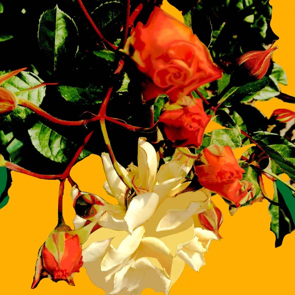 rosarosaefinal1301