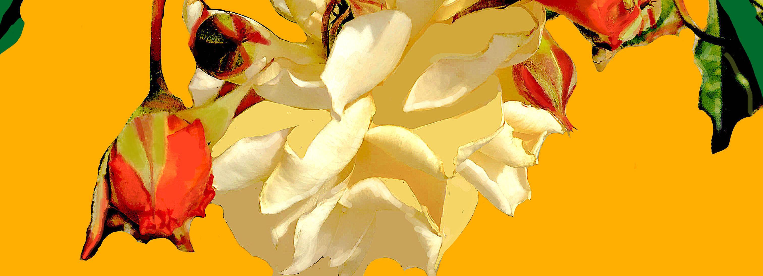 rosarosaefinal1301rec